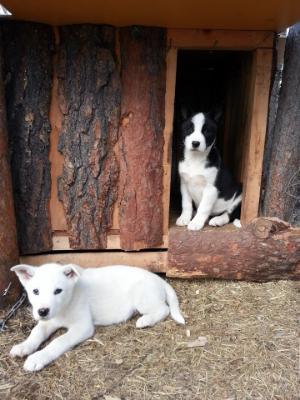 hondernemen in lapland